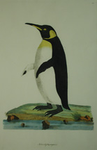 World's First Depiction Of A King Penguin